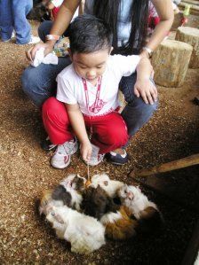 hamsters being fed with hotdog by a pre-schooler