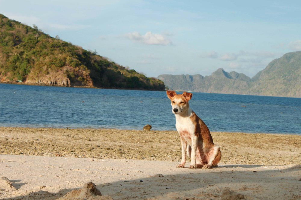 The dog who stands guard over CYC Beach